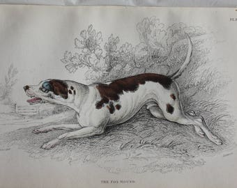old engraving the fox hound 1840