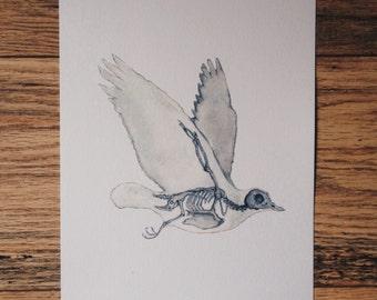 Bird skeleton, anatomy pigeon, print, watercolour painting, animal, art, drawing, picture