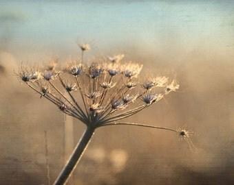 winter garden, dried flowers, botanical art print, nature photography, warm tones, earth tones, nature home decor, fine art photography