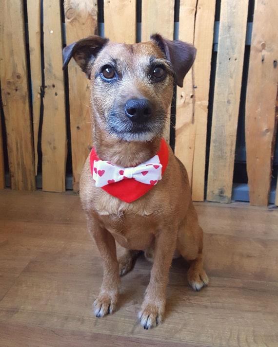 Valentine Dog Bandanna