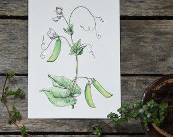 Sweet Peas Original Watercolor