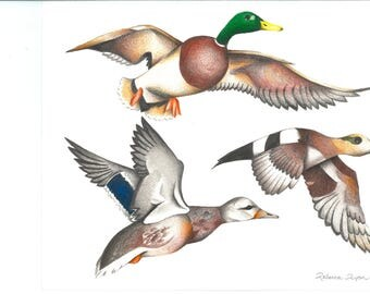 Wild ducks digital download