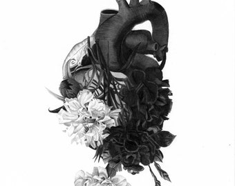 SALE Blooming Heart graphite pencil drawing print a4