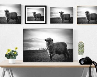 Farm animal, digital download, sheep, instant, animals, prints, farms, farmhouse decor, wall art, posters, poster, home, photo, photography