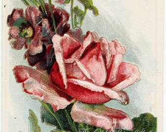 Pink Rose and Purple Flowers on White Background Vintage Embossed Postcard