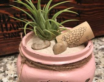 Baby Ball Mason Jar Airplant - PINK