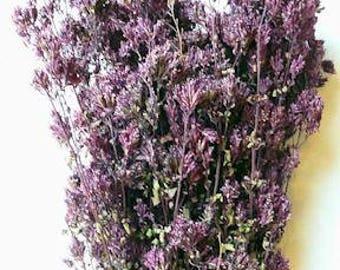Santa Cruz Dried Oregano | Dried Herbs | Dried Purple Flowers | Wedding Decor | 30 Stems