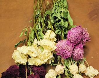 Dried Peonies | Dried Flowers | Peony Flowers | Dried Peony