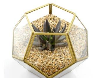 Modern Watertight Gold Glass Terrarium - Air Plant Holder, Air Plant Terrariums, Terrarium Kit, Succulent Terrarium, Tillandsia Terrarium