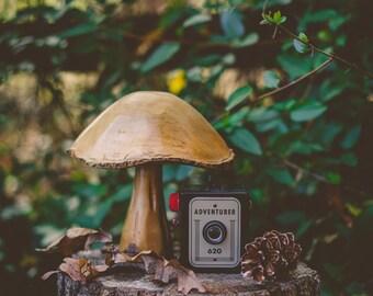 Fine Art Photo, Adventurer, Vintage Camera Art, Nature Art, Camera Photo, Mushroom, Print, Wall Art, Journey, Home Decor, Travel Art