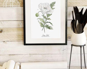 Poppy Study Vol.2 - Scientific illustration. Beautifully textured cotton canvas art print. Order as a 5x7 8x10 11x14 or 16x20 size.