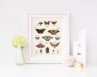 Butterfly Moth Illustration, Butterfly Moth art, Butterfly Moth print, vintage home decor