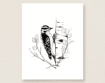 Downy Woodpecker - Ink Illustration Art Print, bird illustration