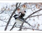 Chickadee Greeting Card - Felt Art