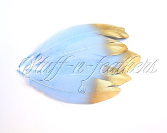 Gold Dipped feathers - Baby Blue GOOSE feathers with Gold Tips loose for millinery, crafts, wedding, 5-8 in (12.5-20 cm), 6 pcs / F195-6G