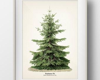 Christmas Tree Botanical Print - Holiday Wall Art - INCLUDES plant name on print - TR-07