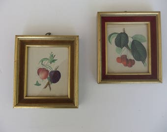 Velvet trimmed miniature frames with botanical fruit prints of cherries plums apricots set of 2