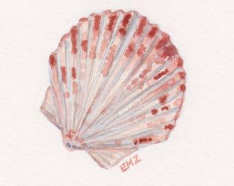 Pink Shell - Original Watercolour Illustration