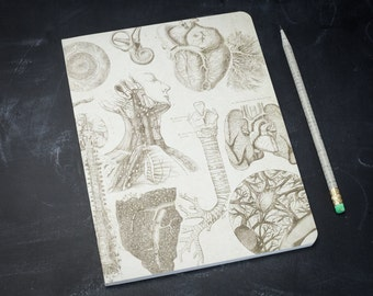 Anatomy Softcover Notebook | Anatomical Journal, Nurse, Doctor Gift, College Ruled Lined, Recycled Paper, Medical, Physiology, Dr, Teacher