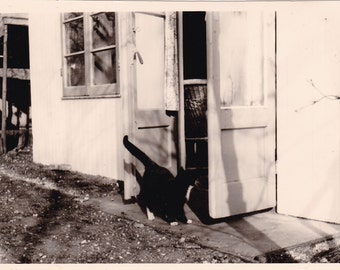 Black And White Cat Looking Through Doorway - Rustic - Snapshot Photo
