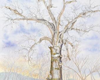 8 x10 Giclee Print - The Mighty Oak