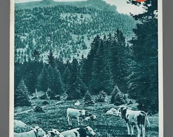 1960s German Bavarian Forest Travel Poster 19.5 x 29 Vintage Poster Original