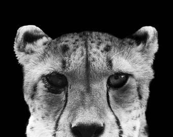 African Cheetah Portrait Photo, Big Cat, Black and White Wildlife and Animal Wall Art and Modern Home Decor