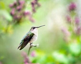 Hummingbird Gift, Bird Decor, Nature Art, Hummingbird Decor, Bird Wall Art, Fine Art Photography Print, Photo Gifts, Gifts for Birders