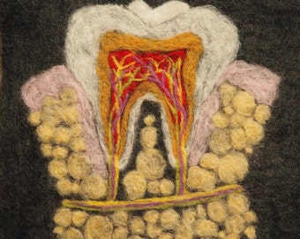 Anatomy of the Tooth Wool Art