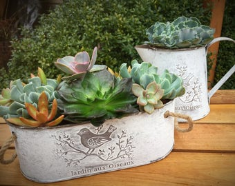 Shabby chic metal oblong planter with rope handles, succulent arrangement, indoor planter, cottage style pot, country planter