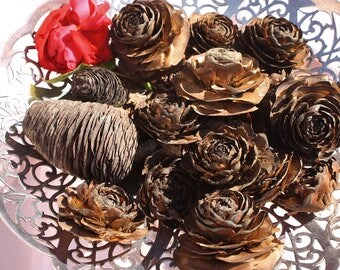 Cedar Roses / Cones - 17 in Assorted Sizes