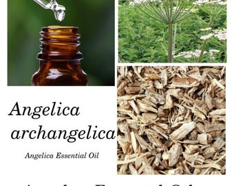 Angelica Essential Oil, Angelica Oil, Angelica Root Essential Oil, 100% Pure Authentic Angelica  EO