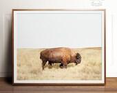 Bison print, Bison art, PRINTABLE art, Landscape print, Landscape photography, Animal print, Buffalo print, Buffalo art, Photography prints