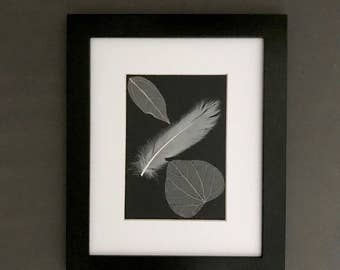 Natural Feather Art. Bleached Waxwood Leaf Skeleton and White Goose Satinette Feather. Black and White Framed Feathers
