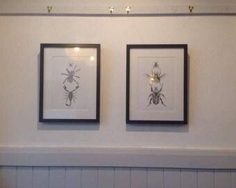 Framed Beetles Illustration