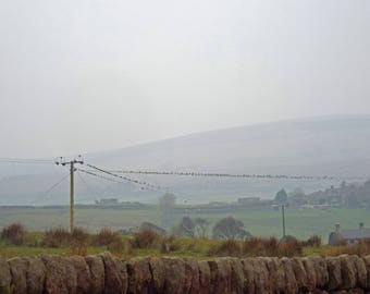 Photograph of starlings on telegraph line in spring rain giclee print