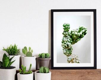 Cactus Print // Wall Art Print // Home Decor // Cactus Art // Limited Edition // Botanical Photography // Cactus Photo // Green
