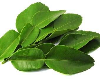 Homegrown Organic Kaffir Lime Leaves