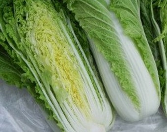 6 Plants - Chinese Michihili Cabbage - Organic Heirloom