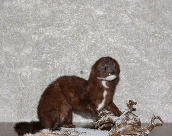 European Mink - Taxidermy Mount, Stuffed Animal For Sale - Weasel - ST3682