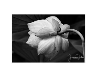 Black & White Photography, Black and White Print, Black and White Art, Floral Photography, Nature Photography, Matted Print, Fine Art Print