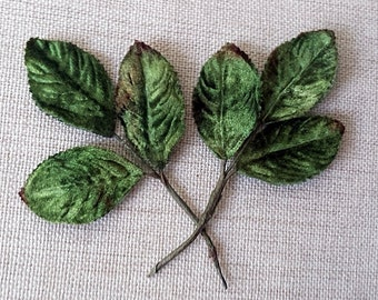 Velvet leaves, dark green , rustic edge leaves.