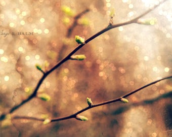 Budding leaves & twigs fine art photography print, bokeh, pink and green, dreamy, abstract, spring, romantic, wedding, minimalist, nature