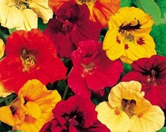 Nasturtium Jewel Mix Flower Seeds/Tropaeolum Majus/Annual    20+