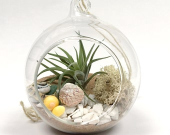 Beach Garden Airplant Terrarium Kit in Hanging Glass Globe • Tillandsia personalised gift present customise Birthday boho wedding planter