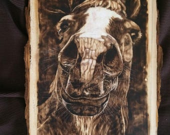 Handmade Wood Burning of a Fjord Horse Close Up