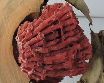 Wood art with red coral