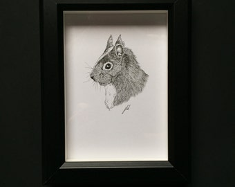 Red Squirrel- Original Drawing