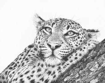 FINE ART PRINT // Leopard // Open Edition // Artwork // Realism // Pen and Ink // Wildlife Art // Black and White // Drawing