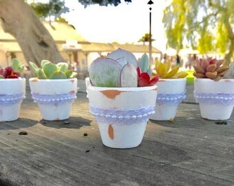 "80 Succulent Favors in 1 3/4"" Mini Terra Cotta Pots - Perfect for Weddings & Bridal Showers - Style MARIA -"